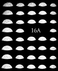 SREBRNE- Naklejki wodne na paznokcie - 16A